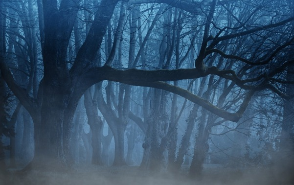 Friday Fiction Foggy Woods