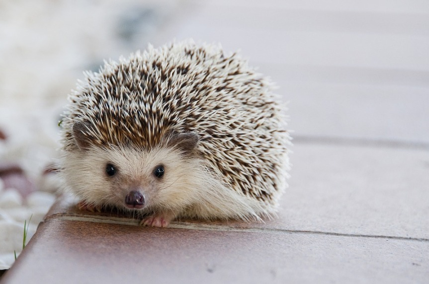 """#FridayFiction Challenge / """"What the HedgehogKnows"""""""