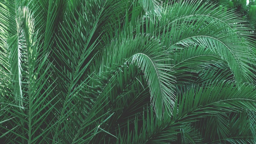 green-1839861_960_720.jpg