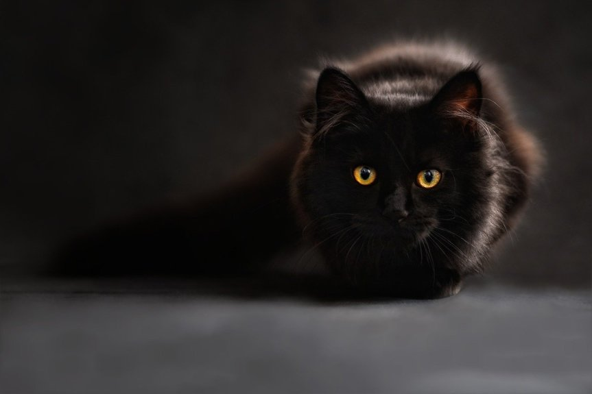 Black Cat ClaudiaWollensen on Pixabay