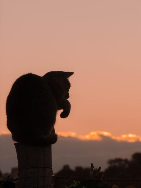 Tai Chi Cat by gustavo1917 on Pixabay