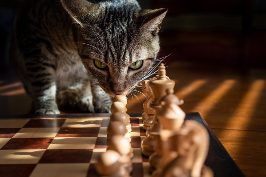 Cat Playing Chess by RickJbrown on Pixabay