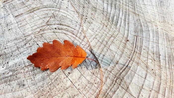 Autumn Oak Leaf by cocoparisienne on Pixabay