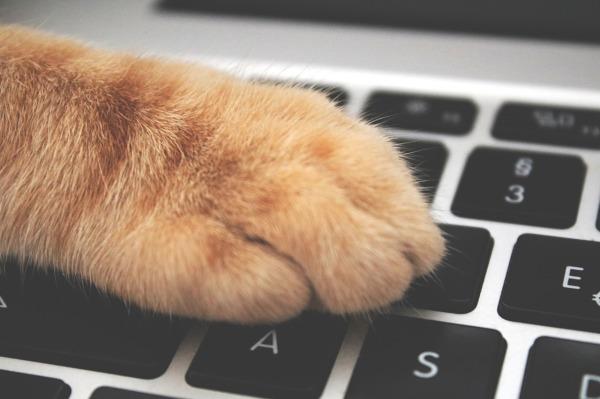 Cat Paw on Keyboard by Lemonsandtea on Pixabay