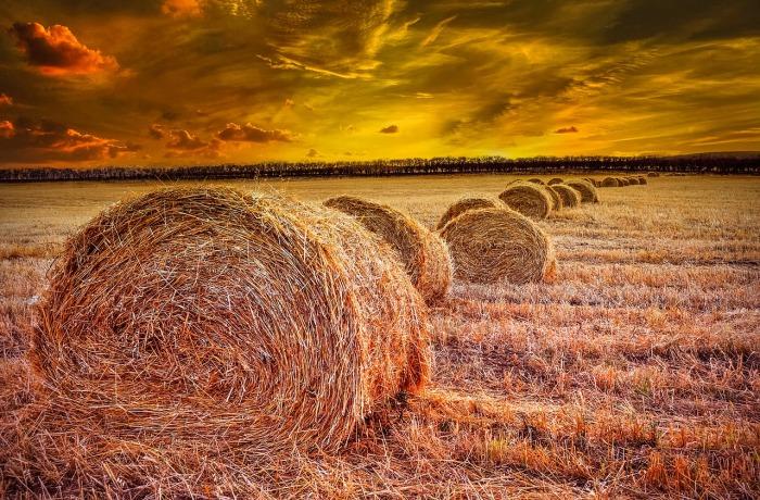Huge Hay Bales by TheDigitalArtist o Pixabay